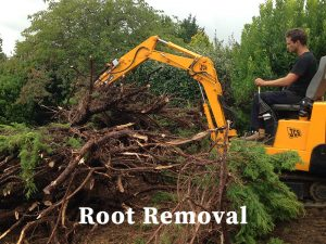Root Removal
