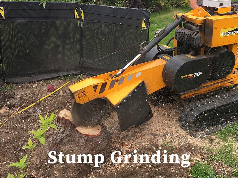 Stump Grinding general